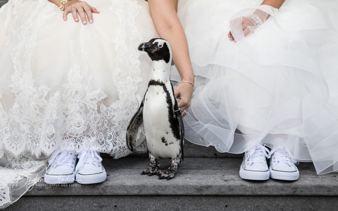 Maryland Zoo In Baltimore, LGBTQ Wedding Photography